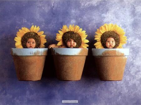 external image geddes-anne-sunflower-trio-6600037.jpg